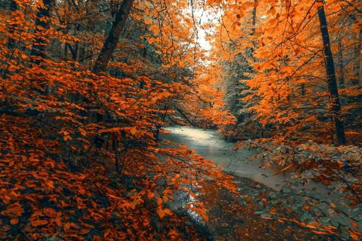 autumnstockphoto